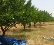 Գյուղ. հող, Արագածոտն, Աշտարակ, Կոշ