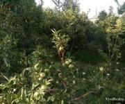 Բնակելի հող, Կոտայք, Եղվարդ, Նոր Արտամետ