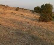 Բնակելի հող, Կոտայք, Աբովյան, Պռոշյան